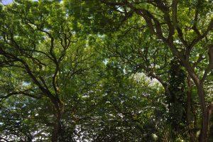 Hawaii Macadamia Farm